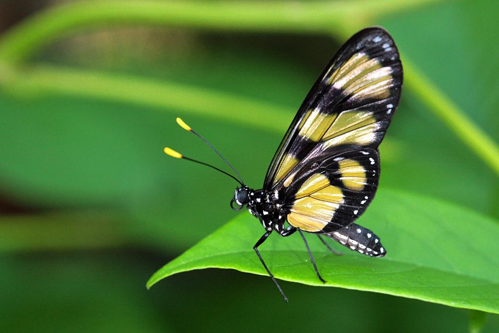transformación, aceptación